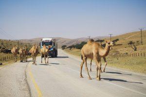 The Frankincense Trail, Salalah, Oman - Uncharted Backpacker