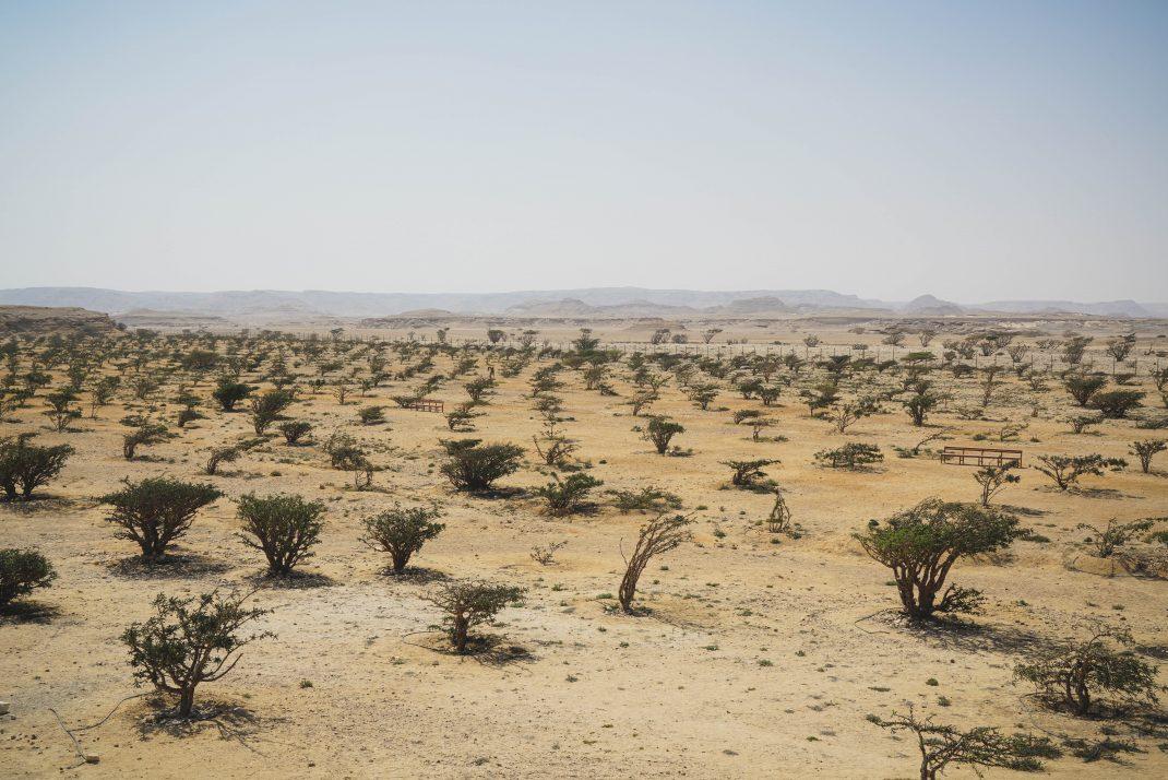 The Frankincense Trail, Salalah, Oman