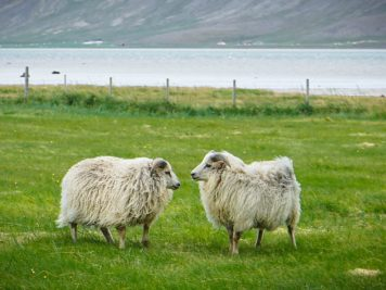 7 Reasons To Visit Iceland Now